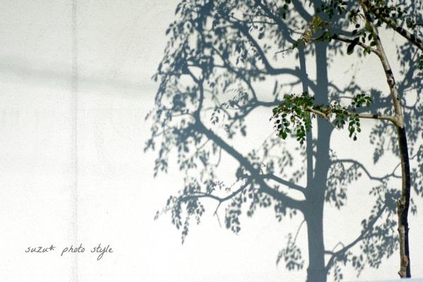 IMGP5987-6.jpg